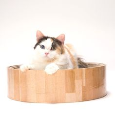 Necoichi Cat Cozy Scratcher Bed -- Check out this great product. (This is an affiliate link and I receive a commission for the sales) #Pets