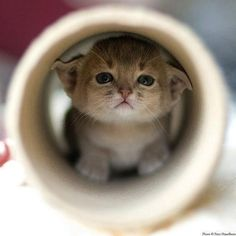 Kitten in a tube