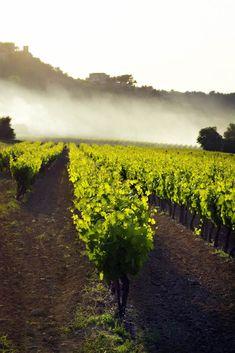 Burgundy Vacation Rentals Tour WIne Abbeys Dijon Beaune Villages