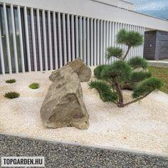 Land Scape, Garden, Modern, Plants, Design, Garten, Trendy Tree, Lawn And Garden, Tuin