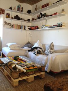 Living room for animals