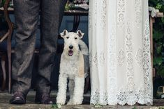 Bride & Groom with their pet dog at their wedding. At dog friendly wedding venue 'Naturally Norwood' at Norwood Park in Southwell, Nottingham Photo by Sarah Vivienne Photography, UK Luxe Wedding, Rustic Wedding, Wedding Venues, Norwood Park, Photography Uk, Pet Dogs, Pets, Nottingham, Vivienne