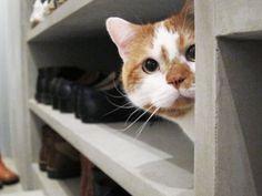 スカイとどんこ Crazy Cat Lady, Crazy Cats, Kitty Cats, Cats And Kittens, Nine Cat, Pretty Baby, Peek A Boos, I Love Cats, Funny Cats