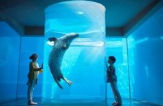 Marine World Uminonakamichi Fukuoka, Whale, Fish, Pets, Animals, Animales, Animaux, Whales, Animal Memes
