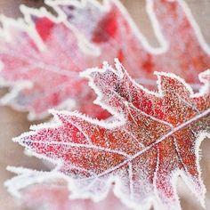 autumns-gloryandwinterwonders:  Mixed Seasons
