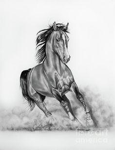 images pencil drawings of horses | Arabian Horse Pencil Drawings