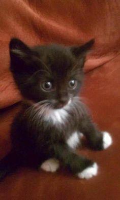 That's the cutest kittten