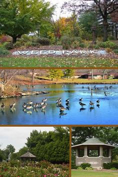 Gain information about the Weed Park. Muscatine Iowa, Great Places, Places To Go, Gain, Weed, Parks, Heaven, Memories, River