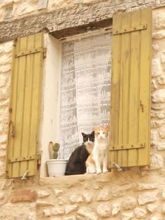 Sault Provence - Cats on the window