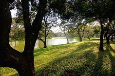ray of light Location: Taiping Lake Garden, Perak, Malaysia Lake Garden, Taiping, Landscape Photographers, Landscape Photos, Documentaries, Paradise, Scenery, Backyard, Explore