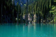 La forêt engloutie du lac Haindy au Kazakhstan