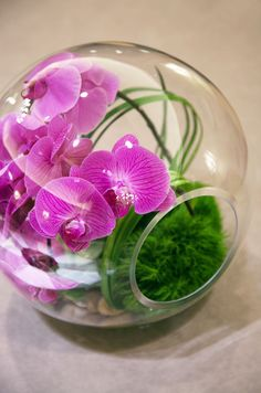 Nothing says modern like a glass terrarium filled with vibrant green moss and fuchsia phalaenopsis orchids.