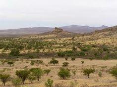 La sabana es una llanura ubicada en climas tropicales en la cual la vegetación se encuentra formando un estrato herbáceo continuo por gramíneas perennes
