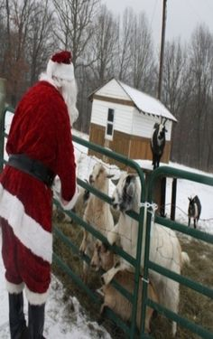 Santa Feeding His Goats
