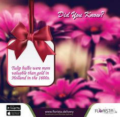 Did you know?  Tulip bulbs were more valuable than gold in  Holland in the 1600s.   To Place your order just call us- 01984-549141 For more flowers visit our Website: www.florista.delivery Follow us: https://twitter.com/floristadelvr https://www.pinterest.com/floristad/ https://www.facebook.com/florista.delivery/ #flowertips #onlinestore #floristadelivery #flowerdeliver #flowershop #florista #onlineflowershop #flowerindhaka #dhaka #bangladesh