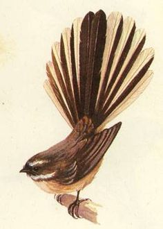 Fantail, forgot to mention I love their whiskers. That's another reason I adore kiwi as well; any bird with whiskers is instantly on my 'love' list. Realistic Tattoo Sleeve, Nz Art, Maori Art, Kiwiana, Bird Artwork, Aboriginal Art, Nature Pictures, Beautiful Birds, Rock Art