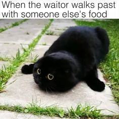 Where's my food?   Credit: Tussetroll_and_Tingeling
