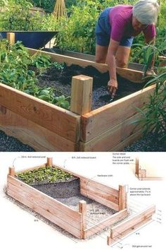 How Many Pepper Plants In A X Raised Bed