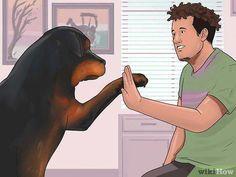 3 Ways to Teach Your Dog Tricks - wikiHow #teachdogtocome