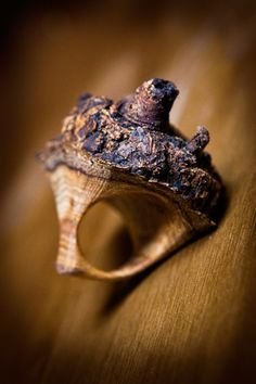 Jewelry   Jewellery   ジュエリー   Bijoux   Gioielli   Joyas   Art   Arte   Création Artistique   Artisan   Precious Metals   Jewels   Settings   Textures   wooden ring by Four Chamber Forge (Chris Burkeybyle)