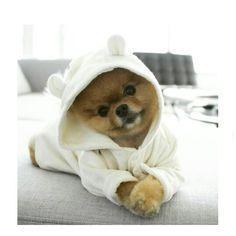 Lil cute face #dog#doglover#pom#pomeranian