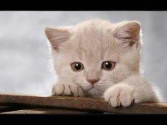 Gatos tiernos y graciosos