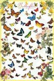 Amazon butterfly poster