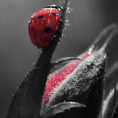 Ladybug in Red… and drops. by Makis Bitos Color Splash, Animals And Pets, Cute Animals, Foto Macro, Fotografia Macro, A Bug's Life, Beautiful Bugs, Bugs And Insects, Fauna