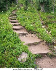 image.shutterstock.com display_pic_with_logo 83390 83390,1243211181,12 stock-photo--steps-up-a-meadow-hillside-30832432.jpg