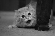 Удачные кадры из жизни животных - Галерея фоторабот