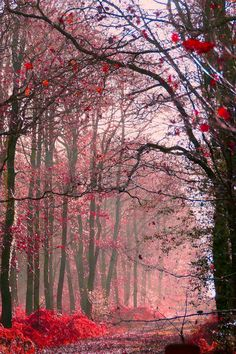 Misty pink forest  (by THOMAS Patrice)