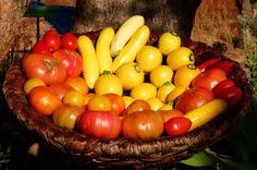 Pedras, Plantas e Companhia II: As cores dos sabores da Horta da Lapa