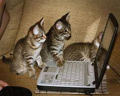 Muito concentrados!  Veja mais em: http://www.jacaesta.com/muito-concentrados/