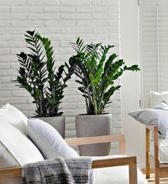 10 Mejores plantas de interior                                                                                                                                                      Más