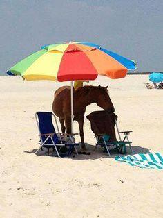 Sea horse?????