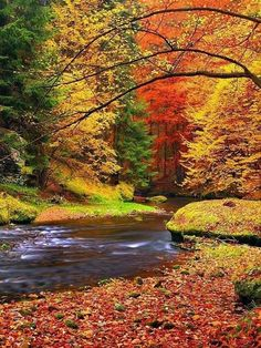 Autumn is my favorite season.  A house in these woods overlooking this river would be heavenly!