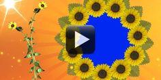 HD Wedding Video Background Free Download