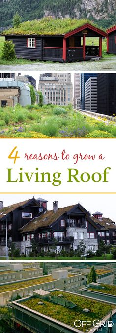 4 best reasons to grow a living roof
