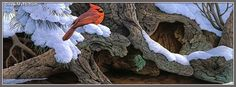 Winter Cardinal Facebook Cover