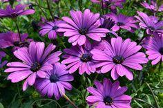 1000 images about mein garden on pinterest plants. Black Bedroom Furniture Sets. Home Design Ideas