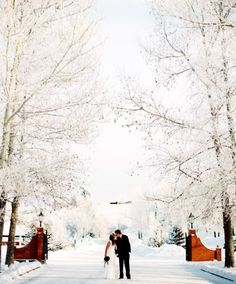 wedding, winter