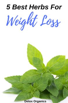 Here's 5 healthy herbs that will boost weight loss detox your body and help you improve your health. Weight Loss Herbs, Best Weight Loss Plan, Weight Loss Detox, Healthy Weight Loss, Anti Inflammatory Herbs, Detox Organics, Healthy Herbs, Healthy Food, Healthy Recipes