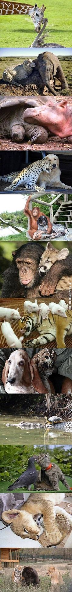 Animals and their friends.