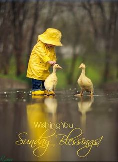 Fotos perfectas: Fair Weather Friends by JakeOlsonStudios Sunday Quotes, Good Morning Quotes, Morning Pics, Fair Weather Friends, Unlikely Friends, Duck Wallpaper, Latest Wallpaper, Yellow Raincoat, Baby Raincoat
