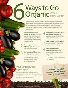 Smart Health Talk Important Advice: 6 Ways to Go Organic. You& alway get the most nutrition the fresher the produce and if grown w/o pesticides in soil full of nutrition and microbial activity. You can grow in a pot if space small. Organic Gardening Tips, Organic Farming, Grow Organic, Healthy Life, Healthy Eating, Clean Eating, Salud Natural, Summer Dishes, Organic Living