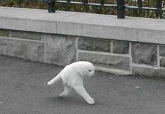 Es ist soweit. Die Katzen fangen an sich in Aliens zu verwandeln. Bei diesem Panorama-Fail sind dem Tier die notwendigsten Körperteile geblieben: Schwanz, 2 Beine und der Kopf. Was brauch man mehr? | unfassbar.es