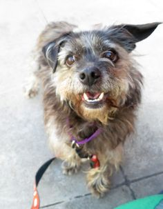 Scruffers is available at the San Francisco SPCA