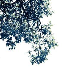 Oak Tree Print. Black and White Nature Photo.Minimalist Art. Gift for men 8x8 or 8x10, bathroom wall art, express shipping