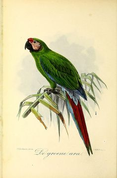 Onze vogels in huis en tuin /. Leyden :P.W.M. Trap,1869-1876..