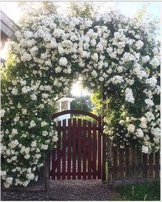 Garden Entrance, Garden Arbor, Garden Gates, Beautiful Flowers Garden, Beautiful Gardens, Flower Archway, Interior Balcony, Flora Garden, Farm Plans